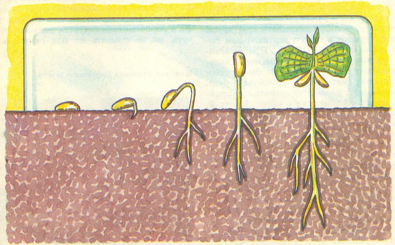 Как сажать семена деревьев 420