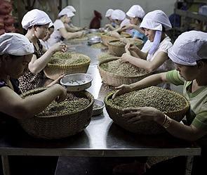 вьетнамский кофе купить в омске