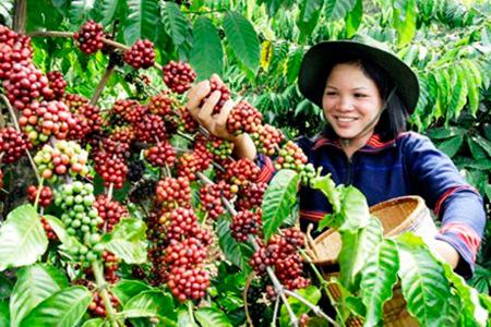 Где купить хороший кофе в зернах