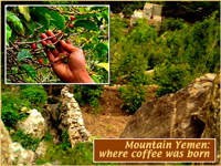Кофе мокко в зернах